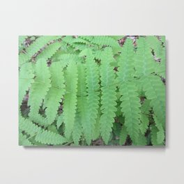 Fern Symmetry Metal Print