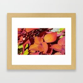 Red Sunset Leaves Framed Art Print