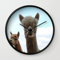 alpaca Wall Clocks featuring Alpaca by SC Photography