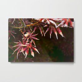 Deep Red Leaves of Japanese Maple Metal Print