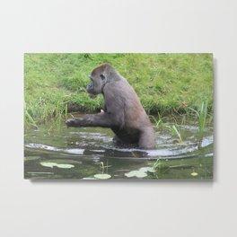 Gorilla Entering A Small Lake Metal Print