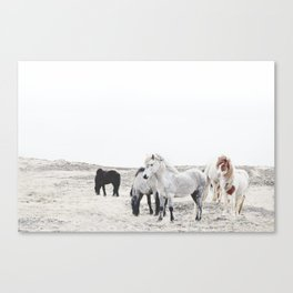 WILD AND FREE  1 - HORSES OF ICELAND Canvas Print