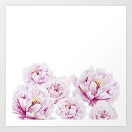 White Roses Pastel white Watercolor Art Print