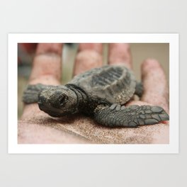 baby olive ridley sea turtle Art Print