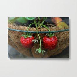 Strawberries in a Basket Metal Print