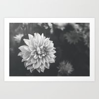 Simply Dahlia in B&W Art Print