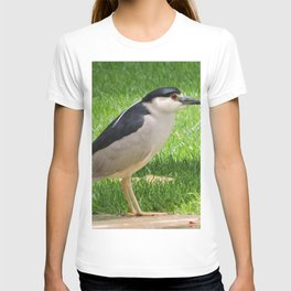 Black Crowned Night Heron in the Park T-shirt