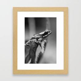 The Resting Frog Framed Art Print
