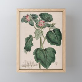 Flower 467 malachra fasciata Rough piled Malachra13 Framed Mini Art Print