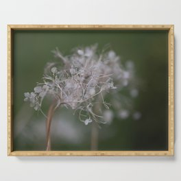 Dried Hydrangea | nature photography Serving Tray