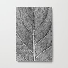 Abstract details of a big tree leaf II Metal Print