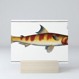 Tumbil (Salmo Tumbil) from Ichtylogie, or Histoire naturelle generale et particiére des poisson (178 Mini Art Print