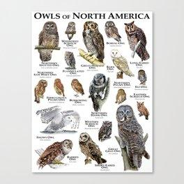 Owls of North America Canvas Print