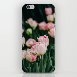 Blush Tulips By The Dozen iPhone Skin