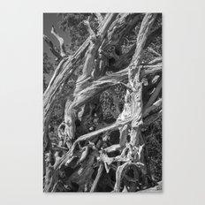 Abstract drift wood Canvas Print