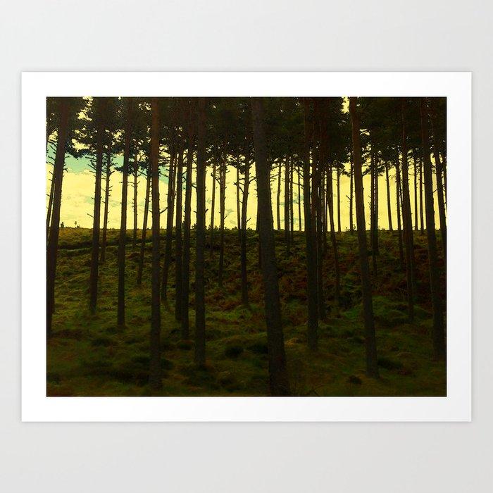 Scottish Pines Art Print