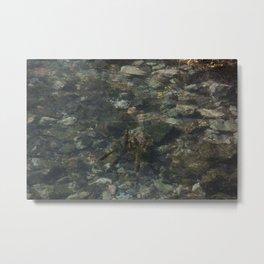 Fish in a Clear Stream Metal Print