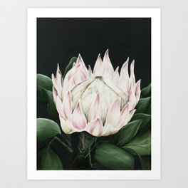 Protea Flower in Pastel Pink and Green Art Print