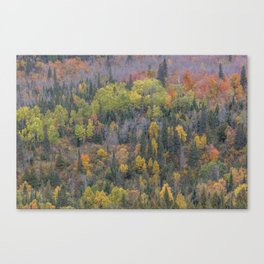 Detail of Peak Fall Colors in Northern Minnesota Canvas Print