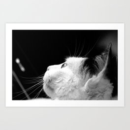 Black & White Cat Art Print
