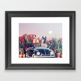 Llamas on the road Framed Art Print