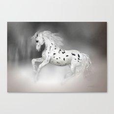 HORSE - Appaloosa Canvas Print