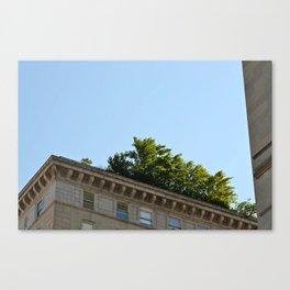 Rooftop Garden Canvas Print