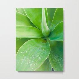 Succulent Dew Drop Metal Print