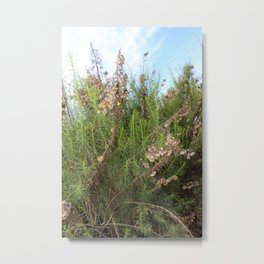 Artemisia Californica Metal Print