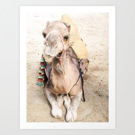 Happy Camel Art Print