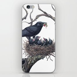 American Crow iPhone Skin