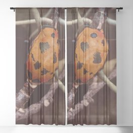Cotton Harlequin Bug Sheer Curtain