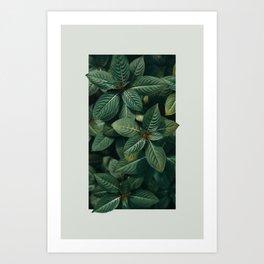 Growth III Art Print