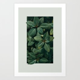 Growth III Art Print