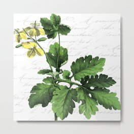 Botanical Flower No3 Metal Print