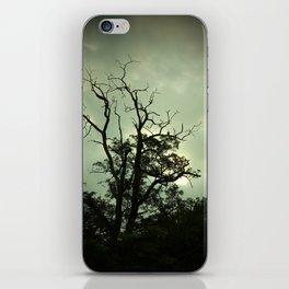 Old Tree iPhone Skin