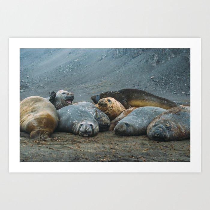 Elephant Seals! Art Print