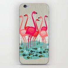 Flamingos by Andrea Lauren  iPhone & iPod Skin