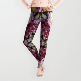 Euphoria Leggings