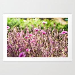 fleurs des champs 5 Art Print