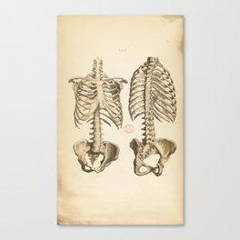 Vintage Illustration of Bones of the Trunk Canvas Print