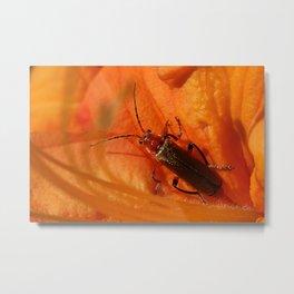 Soldier Beetle Metal Print