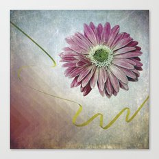 violet daisy with ribbon Canvas Print
