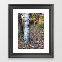 Birch Tree Trail Framed Art Print