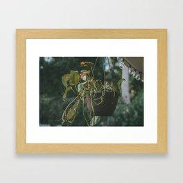 Vining Plant Framed Art Print