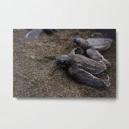 Baby Leather back Sea Turtle Metal Print