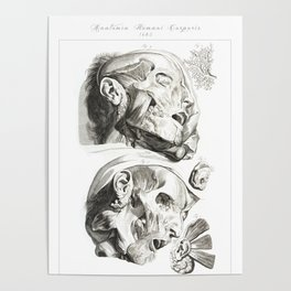 Human Anatomy Art Print HEAD MUSCLE FACE Vintage Anatomy, doctor medical art, Antique Book Plate, Me Poster