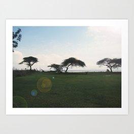 Acacia Field,Ethiopia Art Print