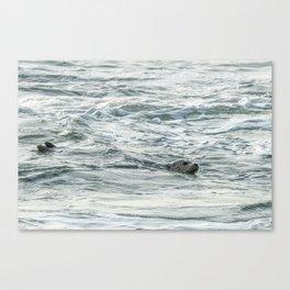 Harbor Seal, No. 2 Canvas Print