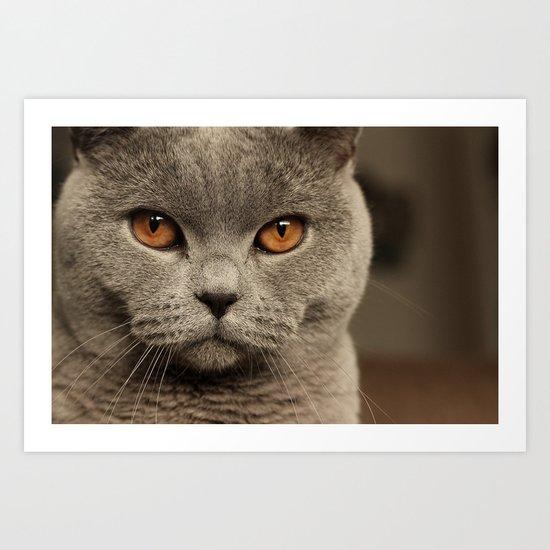 Diesel, the cat - (close up)  Art Print